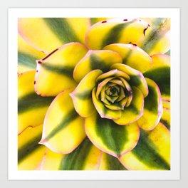 Plant member of the Cactus Art Print