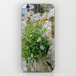 Little Goonreeve Farm - Spanish Daisy iPhone Skin