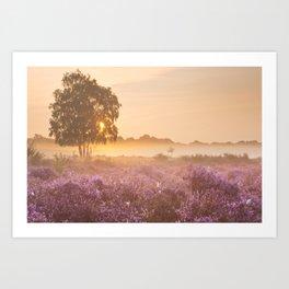 I - Fog over blooming heather near Hilversum, The Netherlands at sunrise Art Print