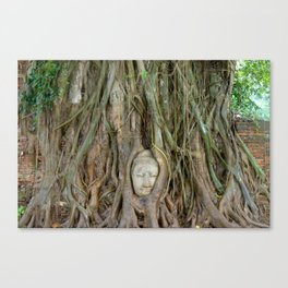 Buddha Head in Tree Roots Canvas Print