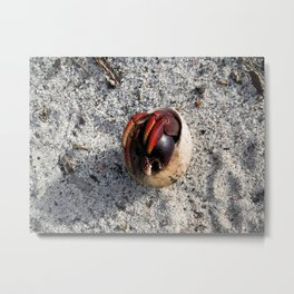 Crab in a Shell Metal Print