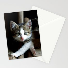 A small cats dream team in the siesta Stationery Cards