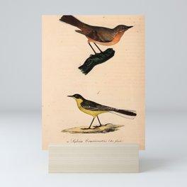 Vintage Print - Atlas of a Journey in North Africa (1828) - Orphean Warbler; Sardinian Warbler Mini Art Print