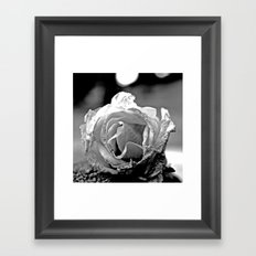 Wilting rose Framed Art Print