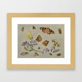 Jan van Kessel the Elder ANTWERP 1626 - 1679 BUTTERFLIES, A MOTH, LADYBIRD AND OTHER INSECTS WITH A Framed Art Print