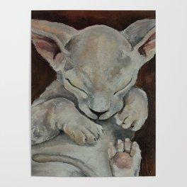 Sphynx, cat, sleeping cat Poster
