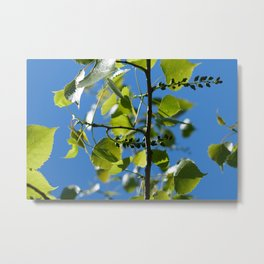 aspen leaves and blossoms Metal Print