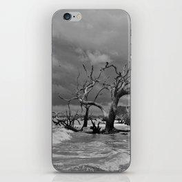Driftwood Beach 2 iPhone Skin