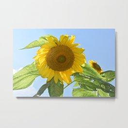 Don't Look Into the Sun(flower)! Metal Print