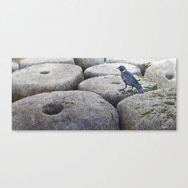 Jackdaw & Retired Mill Stones Canvas Print