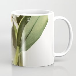 Cattleya eldorado crocata from Reichenbachia Orchids (1888-1894) illustrated by Frederick Sander (18 Coffee Mug