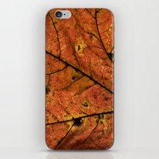 Fall Leaf III iPhone & iPod Skin