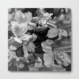 Azaleas in black and white Metal Print