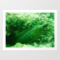 Moray Eel Art Print