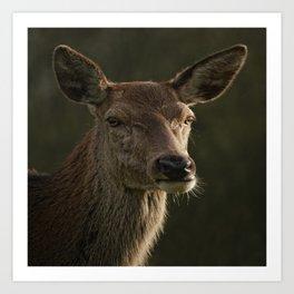 Portrait Of A Wild Red Deer Art Print