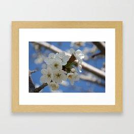 Beautiful Delicate Cherry Blossom Flowers Framed Art Print
