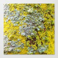 moss Canvas Prints featuring Moss! by eddiek3