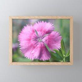 Pink Dianthus Framed Mini Art Print
