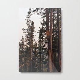 Hidden Forrest Metal Print
