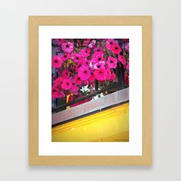 Hot Pink Petunias Framed Art Print