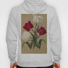 Arendsen, Arentine H. (1836-1915) - Haarlem's Flora 1872 - Single Early Tulips 2 Hoody