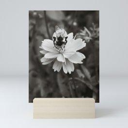 Bee on Cosmos Flower in Tintype Mini Art Print
