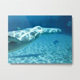 Ocean Blue Beluga Pairs Version 1 Metal Print