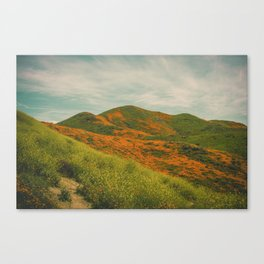 California Poppies 034 Canvas Print