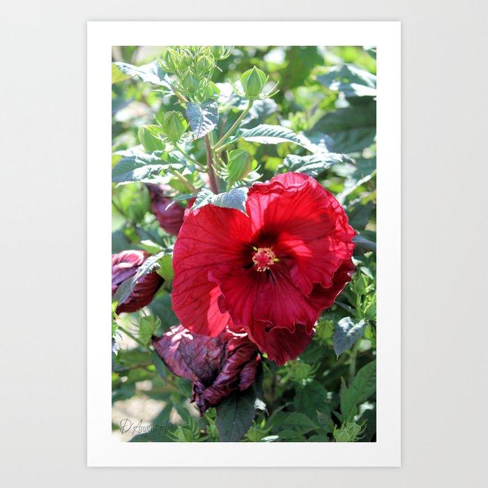 Luna Red Hibiscus Art Print By Daugustart Society6