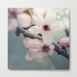Spring blossom on rustic wooden table Metal Print