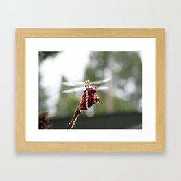 My Dragonfly Wings Framed Art Print