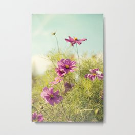 summer cosmos Metal Print