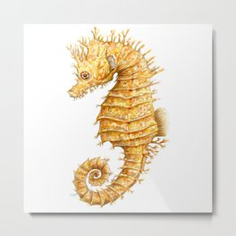 Sea horse, Horse of the seas, Seahorse beauty Metal Print