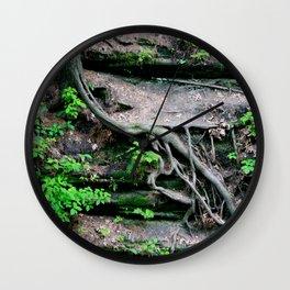 root growth. Wall Clock