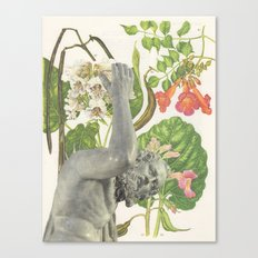 117.  Canvas Print