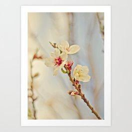 Almond Blossoms in the Wind Art Print