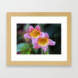 Tangerine Beauty Cross Vine Pair Framed Art Print