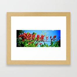 Red Rocket Framed Art Print