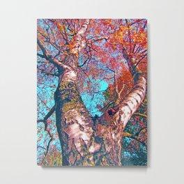 Big Birch in Autumn light Metal Print