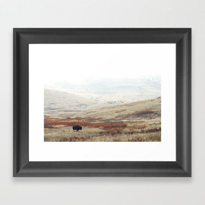 Lone Bison on The National Bison Range in Montana Gerahmter Kunstdruck