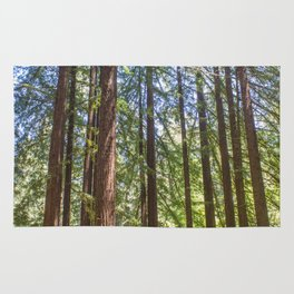 Redwood Grove Rug