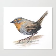 Chucao Bird Watercolor Animal Portrait Canvas Print