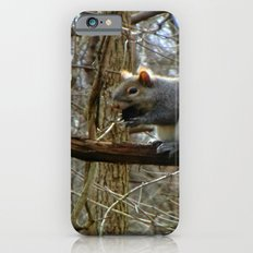 Nuts about You Slim Case iPhone 6s