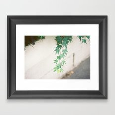 japanese maple leaves Framed Art Print