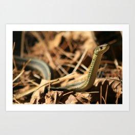 Garter Snake  Art Print