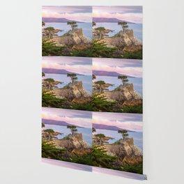 Lone Cypress Spring Sunset Wallpaper