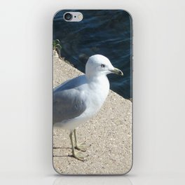 Seagull, Lake Michigan, Shoreline iPhone Skin