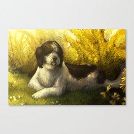 Jake: Sheepdog Portrait Canvas Print