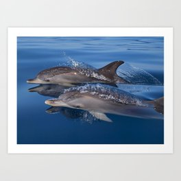 Beautiful Spotted dolphins Stenella frontalis Art Print