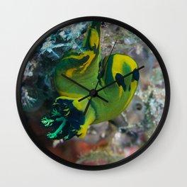 Squishy nembrotha nudi hanging on for dear life Wall Clock